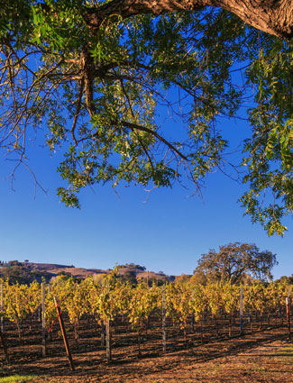 Walker Vineyard - Santa Ynez Valley